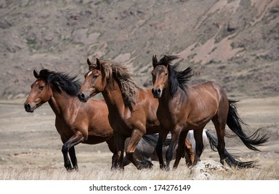 Herd of horses on a background of mountains and steppe grasses