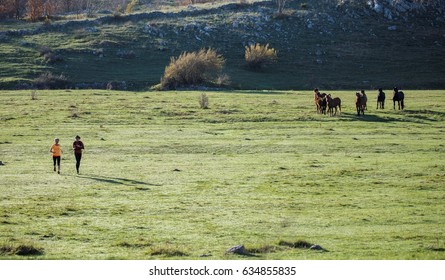 A herd of horses on the lawn, watching two women, running and crossing the lawn. In the background bush. Photo taken in the morning, in National Park, a part of mountain range.