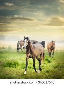 Herd of horses on summer pasture over beautiful dawn sky