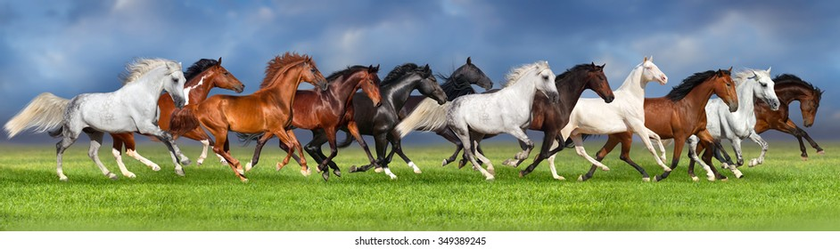 Herd of horses on summer pasture, banner for website