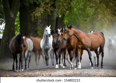 Herd of horses on the village road