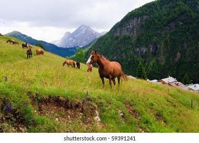 Herd of horses pasture in a mountains near highland village.