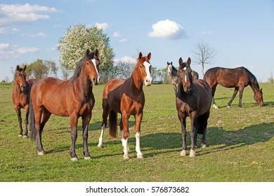 herd of horses posing