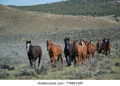 Herd of horses running across sagebrush prairie