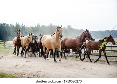 a herd of horses is running and the dust is forming a fog