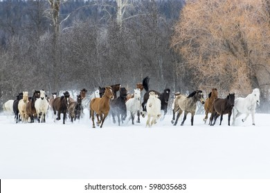 A herd of horses running through the snow in the mountains