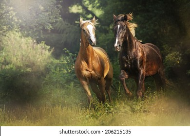 herd of horses running in wild appaloosa, arabian horse, western, thoroughbred, friesian horse,barock pinto