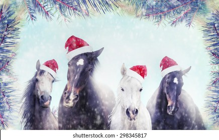 Herd of horses with Santa hat on winter snow and Christmas tree background. Banner for website.