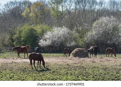 Pferdeherde im Frühjahr