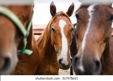 Herd of horses in a stable outdoor at autumn time