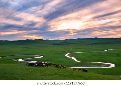 The herd in Muzigler river valley sunset of Hulunbuir grassland of China.