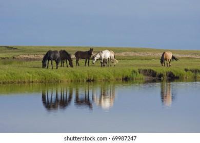 Herd near watering place