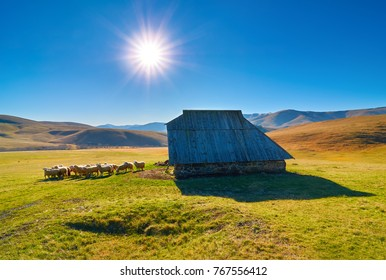 A herd of sheep in front of the sheep house in middle of mountain pasture in Zlatibor, Serbija. Idyllic rural scene.
