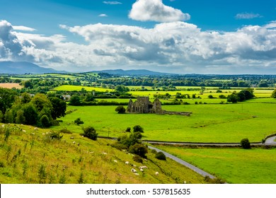Herd Of Sheep In Landscape Of Tipperary In Ireland