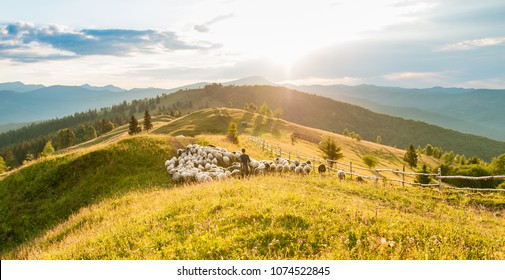 A herd of sheep in the mountains. Beautiful mountain landscape view. Shepherds Home in the Mountains. Mountain range at sunset. Panorama of landscape
