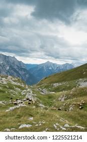 Herd of sheep in Slovenia Alps