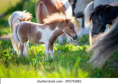 Herd of small cute horses in pasture