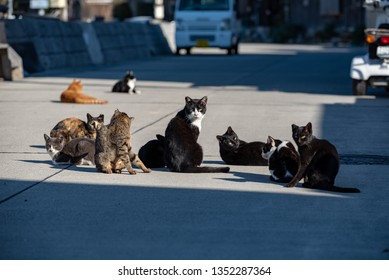 Herd of stray cats in a fishing village