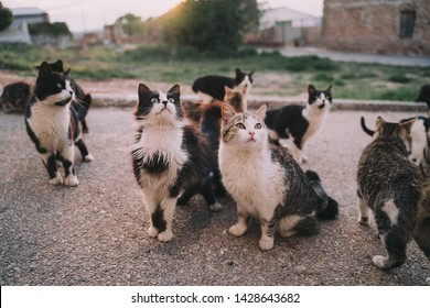 A herd of street cats are eating in the street. They look very hungry. Their hair is dirty, ugly and very damaged. It is a sunny day. Selective focus.