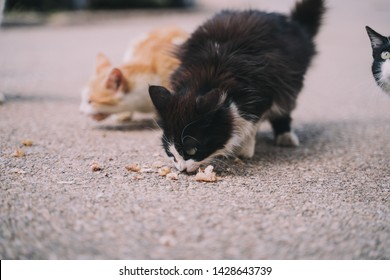 A herd of street cats are eating in the street. They look very hungry. Their hair is dirty, ugly and very damaged. Close up.