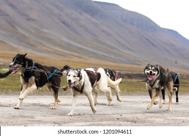 A herd of very exited huskies pulling a dog cart. Longyearbyen, Svalbard.