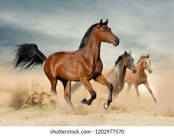 Herd of wild beautiful horses running at liberty