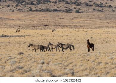 Herd of Wild Horses in the Desert