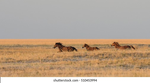 A herd of wild horses galloping across the steppe.Selective focus.