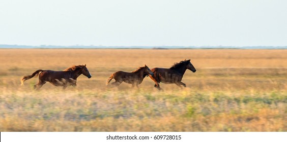 A herd of wild horses are grazing across the steppe. Selective focus.