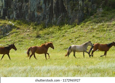 a herd of wild horses grazing in the mountains