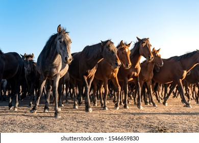 Herd of wild horses. Very curious and friendly. wild horse portrait
