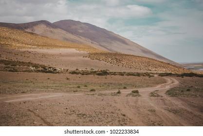 Herd of wild llamas grazes in Eduardo Avaroa national park in Bolivia