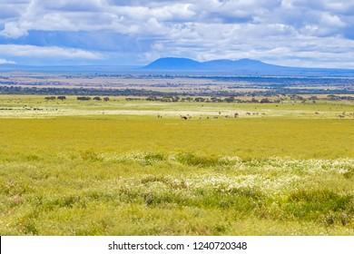 Herd of Wildebeest zebra migration in Serengeti Plains at Serengeti National Park in Tanzania, East Africa
