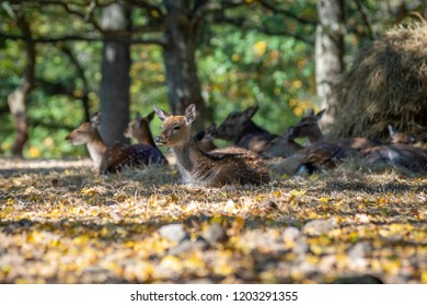 a herd of young deers in the forest