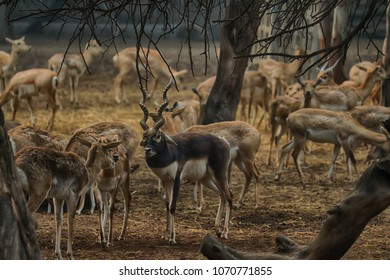 Herds of Deers