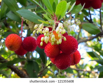 Here is the red fruit and small white bell shaped flowers of the Kousa dogwood tree.  Pretty nature shot.