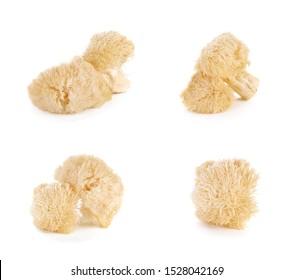 Hericium erinaceus mushroom (monkey head mushroom, bearded tooth fungus, bearded hedgehog mushroom, pom pom, lion's mane mushroom)