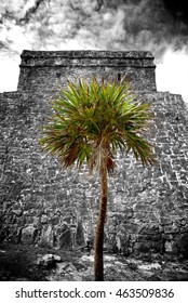 Heritage of Cancun with Coconut Tree