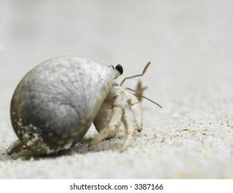 hermit crab crawling on sandy beach