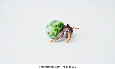 Hermit crab in green seashell on white background.