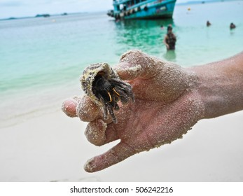 Hermit crab in hand of man on the background of the azure waters of the ocean. A man's hand smeared in sand.