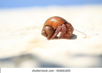 The Hermit Crab on the Beach