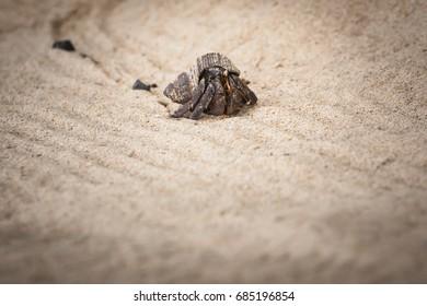 hermit crab on sand beach in Thailand.