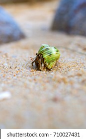 Hermit Crab on a tropiacl beach. Phuket, Thailand