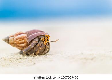 Hermit crab on a tropical beach landscape