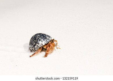 Hermit crab on white sandy beaches of Tachai Island, Similan, Andaman Sea, Thailand