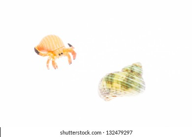 hermit crab and a shell