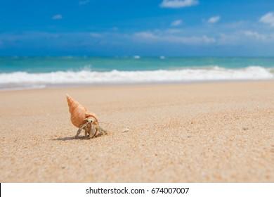 Hermit crab walking on the golden sand Beach