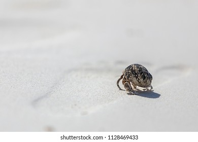 A hermit crab is walking on the white sand, Koh Tachai, Phang-Nga, Thailand