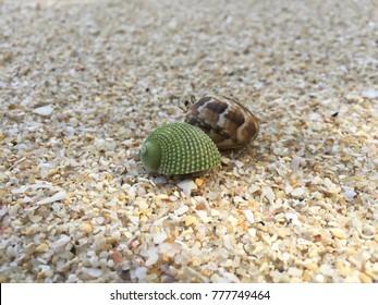 Hermit crabs hiding in shells